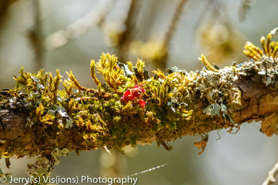 Moss and lichen on a branch