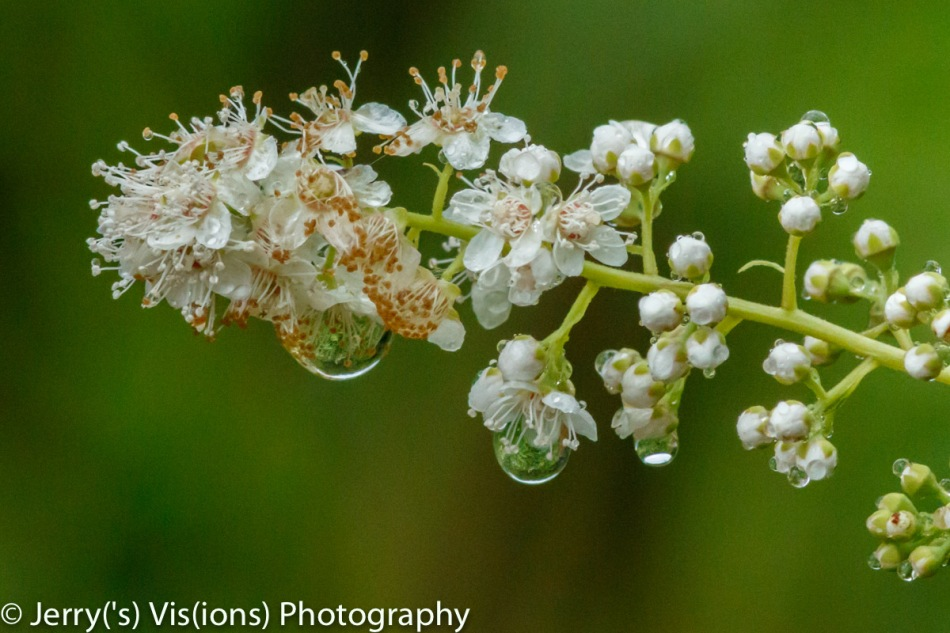 Water drops on unidentified flowers