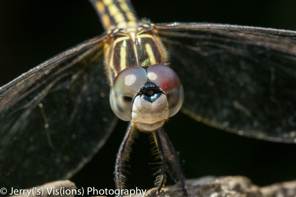 Dragonfly, the uncropped version