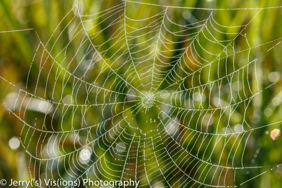Spider web covered with dew 2