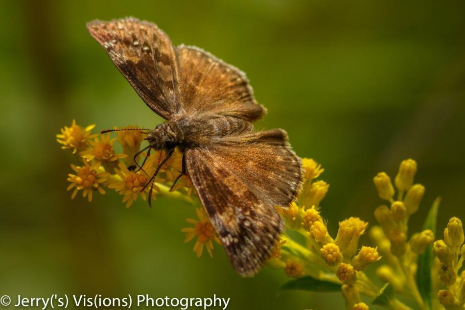 Unidentified fluttering object