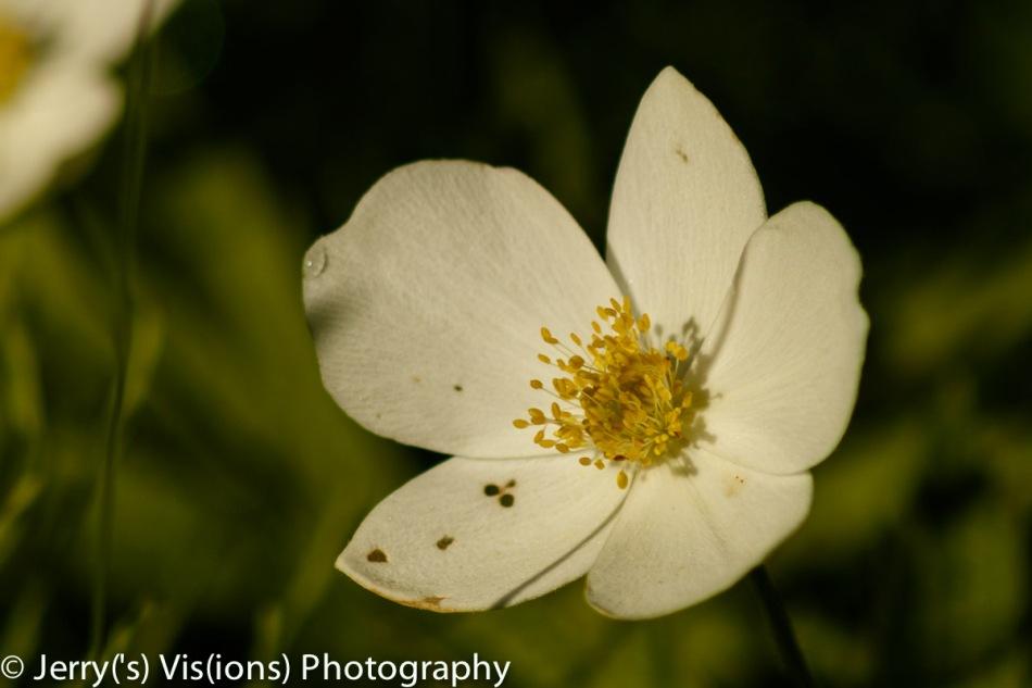 Unidentified flowering object