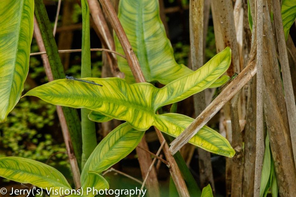 Unidentified plant, for Allen