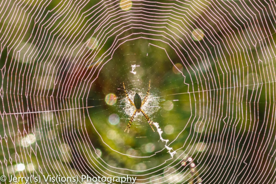The spider that built the web
