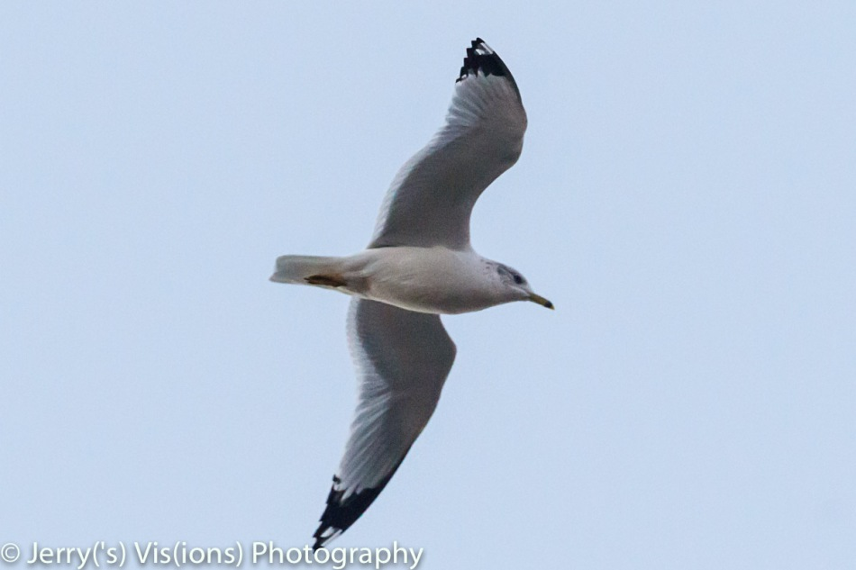 Gull at ISO 12800