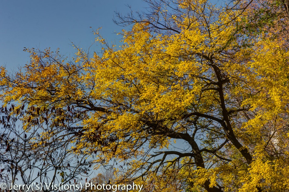 More of the bright yellow color