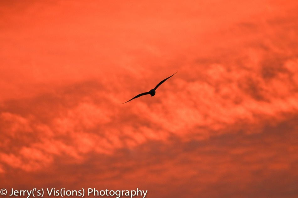 Gull flying into the flame