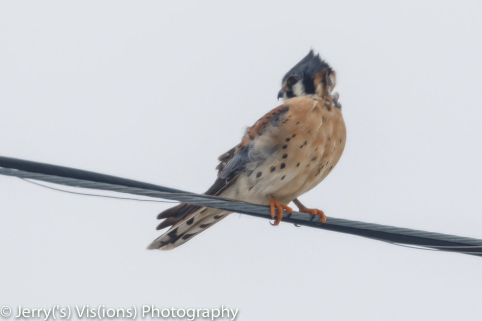 American kestrel shot with the wrong settings