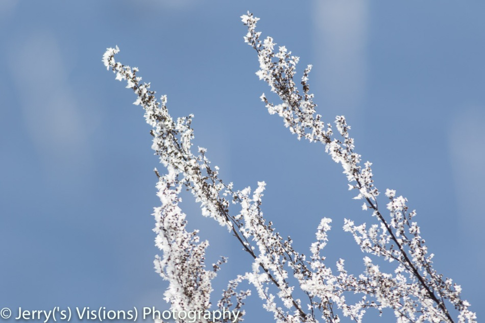 Another frosty morning