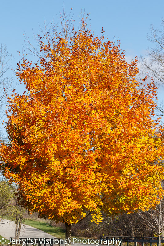 Fall color 2